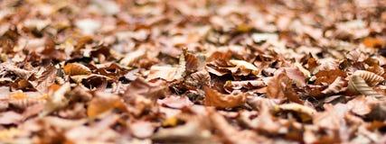 Φύλλα φθινοπώρου Φύλλωμα φθινοπώρου Στοκ εικόνες με δικαίωμα ελεύθερης χρήσης