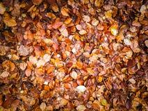 Φύλλα φθινοπώρου ως υπόβαθρο φύσης στοκ φωτογραφίες με δικαίωμα ελεύθερης χρήσης