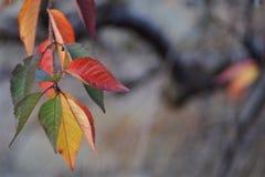 Φύλλα φθινοπώρου Στοκ εικόνες με δικαίωμα ελεύθερης χρήσης