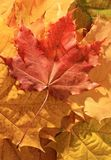 φύλλα φθινοπώρου Στοκ εικόνα με δικαίωμα ελεύθερης χρήσης
