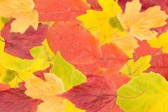 Φύλλα φθινοπώρου. Στοκ φωτογραφία με δικαίωμα ελεύθερης χρήσης