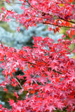 Φύλλα φθινοπώρου στοκ εικόνες