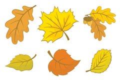 φύλλα φθινοπώρου Στοκ Φωτογραφίες