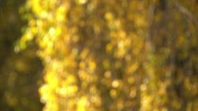 Φύλλα φθινοπώρου Defocused φιλμ μικρού μήκους
