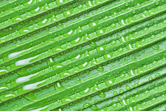 φύλλα Φοίνικας ανασκόπησ&et Στοκ Εικόνα