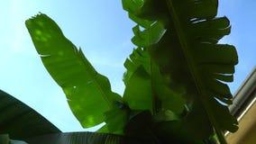 Φύλλα φοινίκων με τον αέρα, φυσικό υπόβαθρο απόθεμα βίντεο