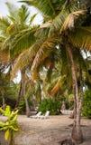 Φύλλα φοινικών καρέκλες σαλονιών σε ένα τροπικό δάσος στο νησί σε Ινδικό Ωκεανό Όμορφο τοπίο της υγρής τροπικής ζούγκλας Στοκ Φωτογραφία
