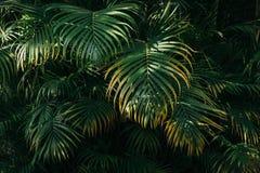 Φύλλα φοινικών με την ελαφριά σκιά ήλιων στοκ φωτογραφίες με δικαίωμα ελεύθερης χρήσης