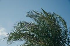 Φύλλα φοινικών που φυσούν από τον αέρα στη σαφή ημέρα μπλε ουρανού στοκ εικόνες με δικαίωμα ελεύθερης χρήσης
