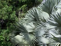 Φύλλα φοινικών σε ένα πάρκο πουλιών στο Fort Lauderdale Στοκ Εικόνες
