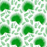 Φύλλα φοινικών στο λευκό διανυσματική απεικόνιση