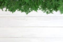 Φύλλα φρέσκα πράσινα πεύκων, ασιατικό Arborvitae, orientali Thuja Στοκ φωτογραφία με δικαίωμα ελεύθερης χρήσης