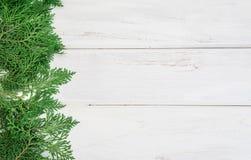 Φύλλα φρέσκα πράσινα πεύκων, ασιατικό Arborvitae, orientali Thuja Στοκ Εικόνες