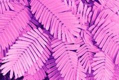 Φύλλα φτερών στον κήπο ή το δάσος για το υπόβαθρο Στοκ Εικόνες