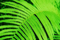 Φύλλα φτερών φτερών Στοκ Φωτογραφία