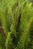 φύλλα φτερών Στοκ εικόνα με δικαίωμα ελεύθερης χρήσης