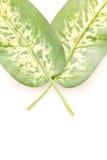 φύλλα φτερών Στοκ φωτογραφίες με δικαίωμα ελεύθερης χρήσης