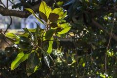 Φύλλα φυτού αναδρομικά φωτισμένα στον κήπο Στοκ Φωτογραφία