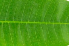 Φύλλα Φύλλο σύσταση Υπόβαθρο Στοκ Φωτογραφία