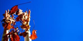 φύλλα χεριών Στοκ Εικόνα