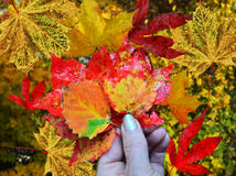 φύλλα χεριών Στοκ Εικόνες