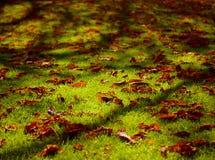 φύλλα χορτοταπήτων στοκ εικόνα