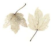 φύλλα Στοκ φωτογραφία με δικαίωμα ελεύθερης χρήσης
