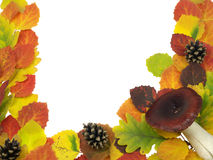 φύλλα Στοκ εικόνες με δικαίωμα ελεύθερης χρήσης