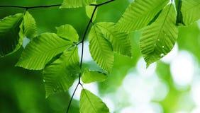 φύλλα Στοκ Φωτογραφίες