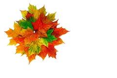 φύλλα Στοκ Φωτογραφία