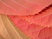 φύλλα στοκ εικόνα