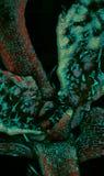 Φύλλα Arabidopsis και trichomes Στοκ φωτογραφία με δικαίωμα ελεύθερης χρήσης