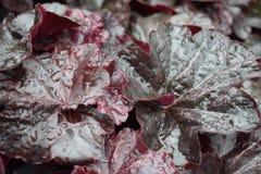 Φύλλα Begonia στο νεφελώδες καιρικό υπόβαθρο, σύσταση, στοκ φωτογραφίες
