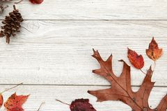 Φύλλα Foilage πτώσης σε ένα ηλικίας άσπρο ξύλινο υπόβαθρο Στοκ Εικόνες