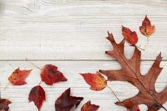 Φύλλα Foilage πτώσης σε ένα ηλικίας άσπρο ξύλινο υπόβαθρο Στοκ εικόνα με δικαίωμα ελεύθερης χρήσης
