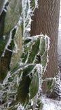 Φύλλα Ice_on_a_few στοκ εικόνες