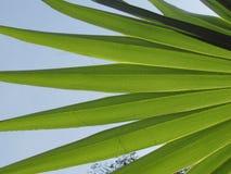 Φύλλα Plam αναδρομικά φωτισμένα στο φρέσκο κλίμα άνοιξη ουρανού Στοκ εικόνες με δικαίωμα ελεύθερης χρήσης