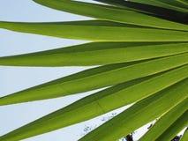 Φύλλα Plam αναδρομικά φωτισμένα στο φρέσκο κλίμα άνοιξη ουρανού Στοκ Εικόνες