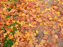 φύλλα s φθινοπώρου στοκ φωτογραφία με δικαίωμα ελεύθερης χρήσης