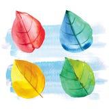 Φύλλα Watercolor επίσης corel σύρετε το διάνυσμα απεικόνισης Στοκ Φωτογραφία