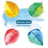 Φύλλα Watercolor επίσης corel σύρετε το διάνυσμα απεικόνισης Στοκ Εικόνα