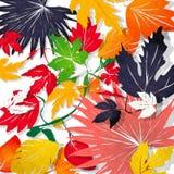 Φύλλα Watercolor ελεύθερη απεικόνιση δικαιώματος