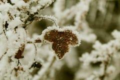 Φύλλο Ð  της σταφίδας στο χιόνι Στοκ φωτογραφία με δικαίωμα ελεύθερης χρήσης