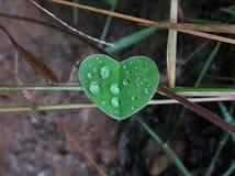 Φύλλο αγάπης στοκ φωτογραφία