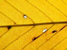 φύλλο ανασκόπησης φθινοπ Στοκ φωτογραφία με δικαίωμα ελεύθερης χρήσης