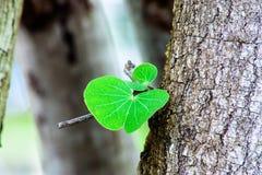 Φύλλο δέντρων από το παλαιό δέντρο στοκ εικόνες με δικαίωμα ελεύθερης χρήσης