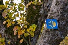 Φύλλο δέντρων φυτού με το σημάδι του Σαντιάγο de Compostela jajobsweg στοκ εικόνες