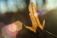 φύλλο δασικών δέντρων με το backlight στοκ εικόνες