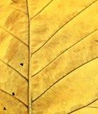 φύλλο κίτρινο Στοκ φωτογραφία με δικαίωμα ελεύθερης χρήσης