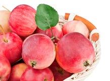 φύλλο καλαθιών μήλων ώριμο Στοκ φωτογραφία με δικαίωμα ελεύθερης χρήσης